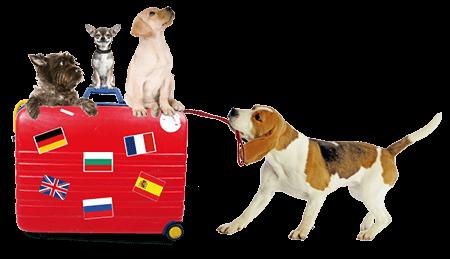 Voyage chien chat