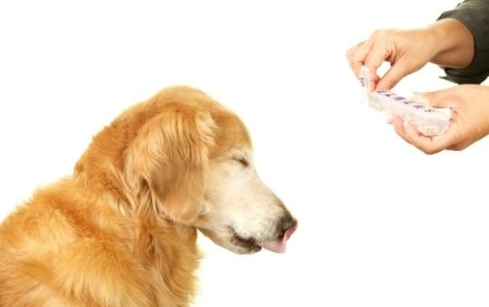 Donner un médicament à un chien