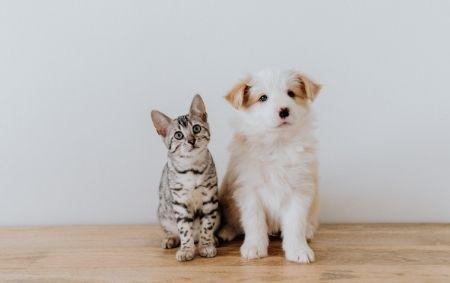 Nettoyer oreilles chat et chien
