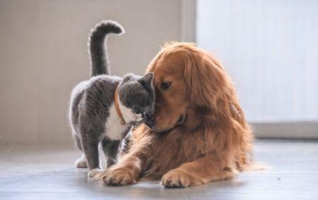Traiter les parasites pour les chats et les chiens